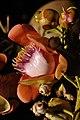 Couroupita guianensis - Murshidabad 2014-11-11 8903.JPG