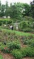 Cranford-Rose-Garden.jpg