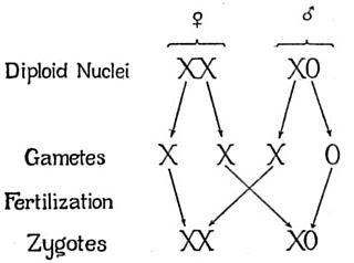 X0 sex-determination system