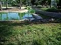 Crocodile park dvo.jpg