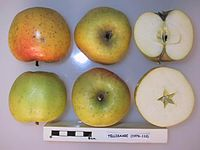 Cross section of Tellisaare (MM106), National Fruit Collection (acc. 1976-110).jpg