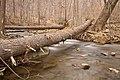 Cunningham Forest Stream - HDR (15836631422).jpg