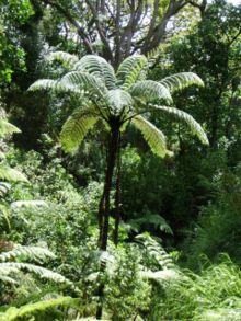 Flora Of New Zealand Wikipedia