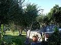 Cyclades Paros Paroikia Pension Sofia Jardin - panoramio.jpg