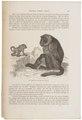 Cynocephalus porcarius - 1700-1880 - Print - Iconographia Zoologica - Special Collections University of Amsterdam - UBA01 IZ20100007.tif