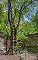 Désert Rousseau Sud Tilleul.jpg