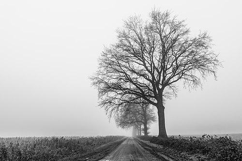 Dülmen, Leuste, Bäume im Nebel -- 2020 -- 5042 (bw).jpg
