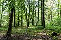 Dülmen, Naturschutzgebiet -Franzosenbach- -- 2014 -- 0046.jpg