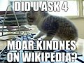 DID U ASK 4 MOAR KINDESS ON WIKIPEDIA.jpg