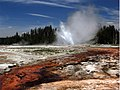 Daisy Geyser erupting in Yellowstone National Park 1.jpg