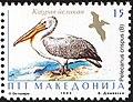 Dalmatian Pelican (Pelecanus crispus).jpg