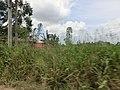 Dambulla, Sri Lanka - panoramio (95).jpg
