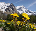 Dandelions and mountains.jpg