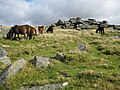 Dartmoor, Littaford Tor - geograph.org.uk - 1039800.jpg
