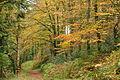 Deerpark Wood (1636).jpg