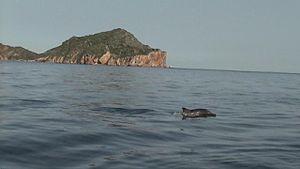 Mochima National Park - Image: Delfin en el parque Nacional Mochima