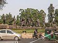 Delhi-Dr. Murali Mohan Gurram (2).jpg