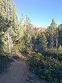 Devil's Bridge Trail, Sedona, Arizona - panoramio (2).jpg