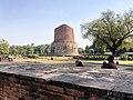 Dhamek Stupa Full view.jpg