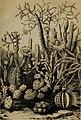Die Pflanzendecke der Erde - populäre Darstellung der Pflanzengeographie für gebildete Naturfreunde (1859) (20912735546).jpg