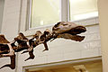 Dinosaurs in Their Time, Carnegie Museum of Natural History, 2013-12-14 08.jpg