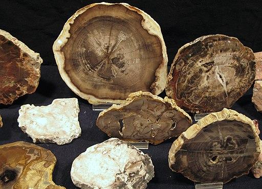 Discs of petrified wood