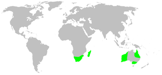 Archaeidae - Image: Distribution.archaei dae.1