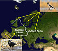 Distribution of carrion and hooded crows across Europe.jpg