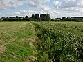 Ditton Meadows - geograph.org.uk - 927718.jpg