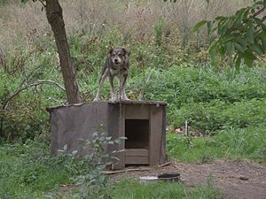Rural dog house