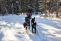 Dogsled ride at Riley Creek Campground (12713272763).jpg