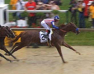 Dortmund (horse) - Dortmund at the Preakness Stakes