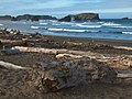 Driftwood on the beach in Bandon (4332557209).jpg