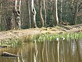 Ducks on Blackweir pond - geograph.org.uk - 1214332.jpg