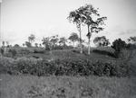 ETH-BIB-Afrikanisches Landwirtschaftsland-Kilimanjaroflug 1929-30-LBS MH02-07-0256.tif