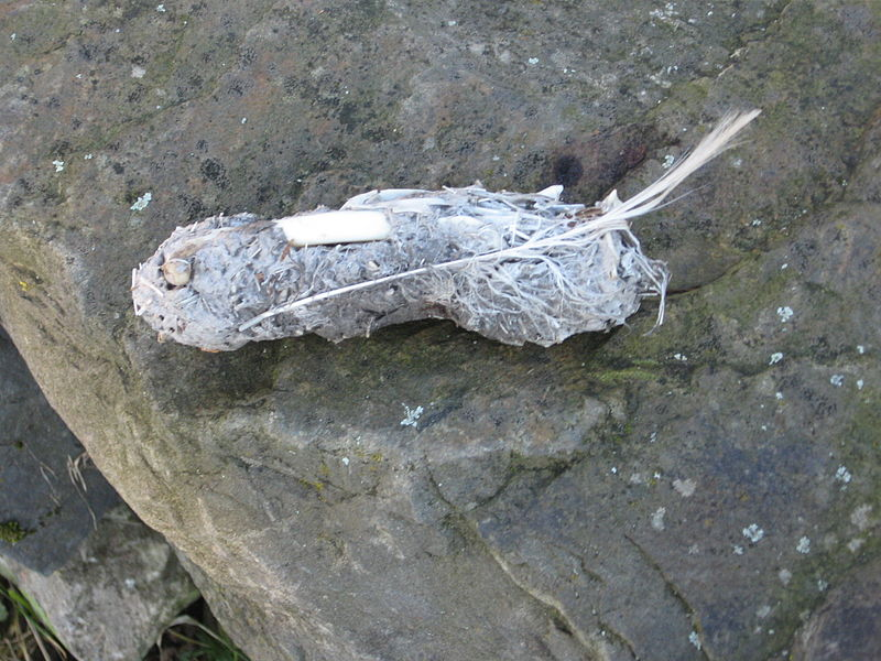 File:Eagle Owl Pellet.jpg