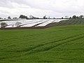 East Scryne farm near East Haven - geograph.org.uk - 13706.jpg