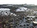 East shore, Blackness Castle - geograph.org.uk - 641588.jpg