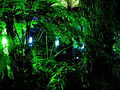 Edinburgh Botanic Gardnes (2311400078).jpg