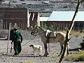 El gaucho, el perro, el caballo, el ojo..JPG