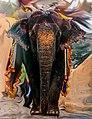 Elephant ride japiur.jpg