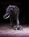 Elephantidae Elefant im Zirkus Fuss auf Mann.JPG
