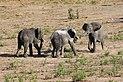 Elephants in Chobe National Park 03.jpg