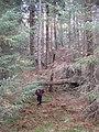Elibank Forest - geograph.org.uk - 1763691.jpg