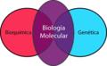 EsquemaBiologiaMolecular.png