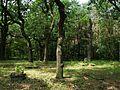 Evang. Cemetery in Niwka (Puszczykowo) (2).jpg