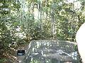 Exploração da floresta.JPG