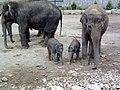 Exploring elephants (160555794).jpg