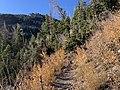 Fall Colors on South Loop Trail to Charleston Peak.jpg