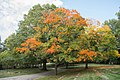 Fall colors 01 - Lake View Cemetery - 2015-10-12 (22300847971).jpg